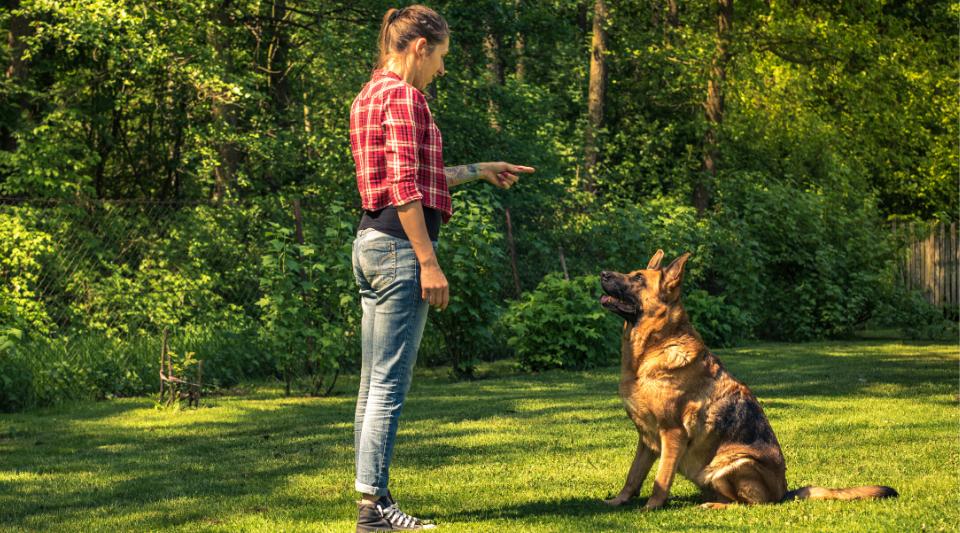 comment bien éduquer son chien