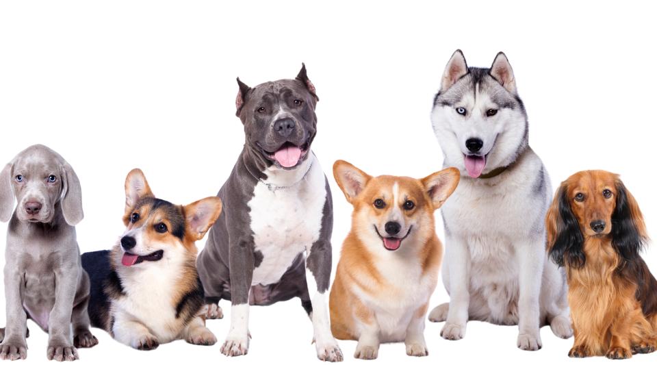 chien avec une assurance santé pour chiens