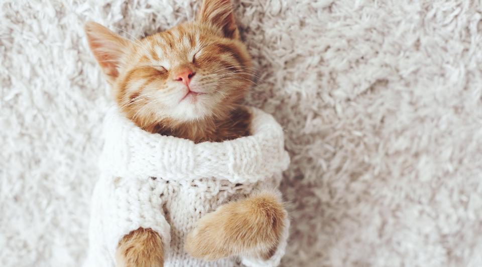 dressage et education du chat : conseils