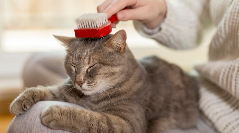 méthodes et astuces pour soigner et entretenir son chat