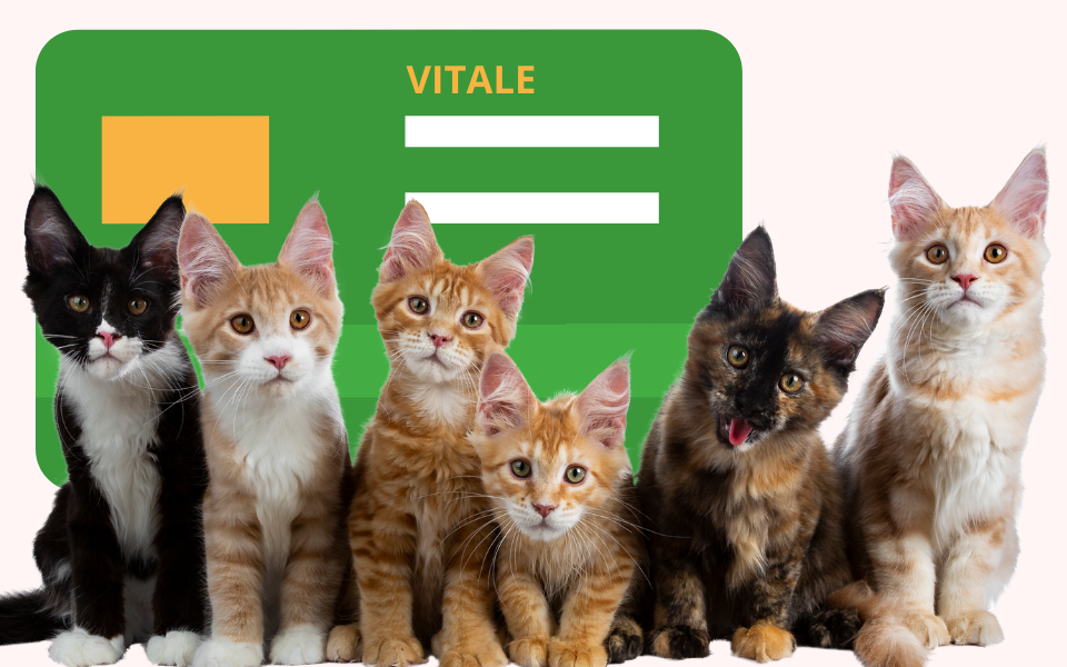 L'assurance santé pour chat